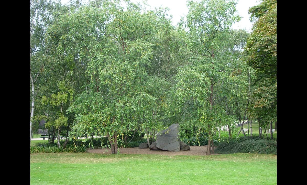 The Holocaust Memorial Garden in Hyde Park was opened in 1983.